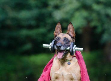 Jakie zaburzenia przewodu pokarmowego w czasie treningu?